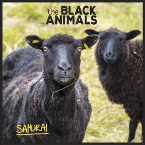 BlackAnimals